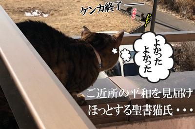20180210 ほっとする聖書猫氏.jpg