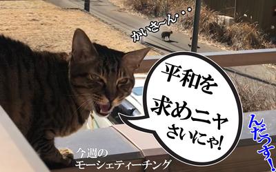 20180210 平和猫!.jpg